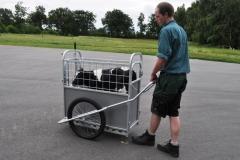 CalfBuggy einfacher Transport Ihrer Kälber